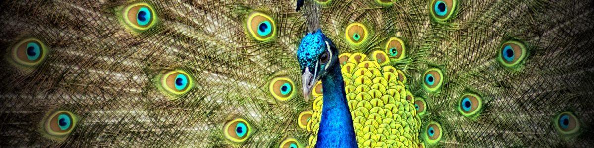 https://ilelumiere.fr/wp-content/uploads/2015/12/peacock-50515-1-1200x300.jpg